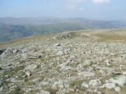 rocky pastures