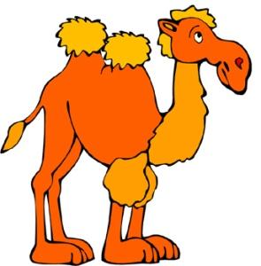 camel 1
